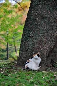 日比谷公園の三毛猫さくらと紅葉