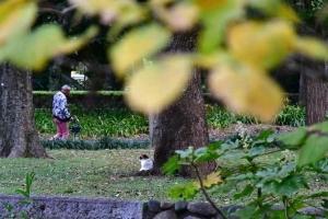 黄葉したマンサクの葉と小さく写っている日比谷公園の三毛猫さくら、ナイスな服装の通行人