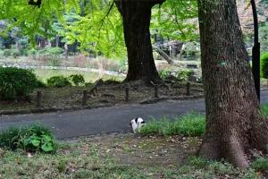 草むらに頭を入れている日比谷公園の三毛猫さくら