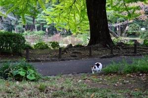 こっちに気付いた日比谷公園の三毛猫さくら