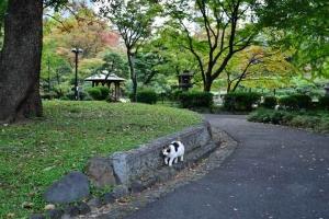 細い場所を歩く日比谷公園の三毛猫さくらと始まりの紅葉