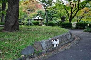 石に顔をこすりつける日比谷公園の三毛猫さくらと始まりの紅葉