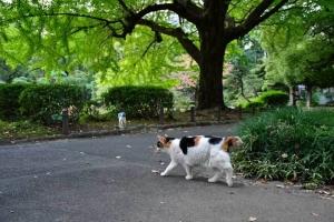 日比谷公園の三毛猫さくらと大きな銀杏の木