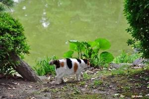 日比谷公園の雲形池と三毛猫さくら
