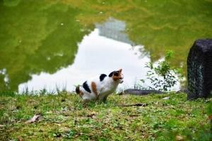 日比谷公園の三毛猫さくらと池に映る曇り空