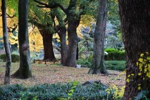 小さく写っている日比谷公園の三毛猫さくらと紅葉