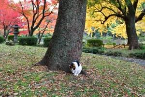 日比谷公園の紅葉と三毛猫さくら