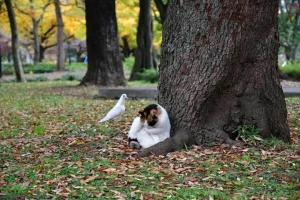 日比谷公園の紅葉と三毛猫さくらと白いハト