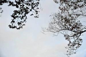 空とケヤキの枝