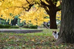 木の根元から顔を出す日比谷公園の三毛猫さくら