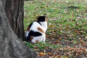 日比谷公園の三毛猫さくらの後ろ姿(猫背)
