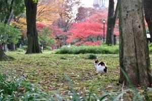 日比谷公園の三毛猫さくらともみじ紅葉