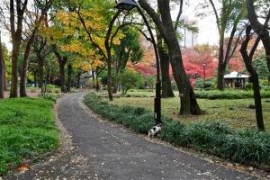 道に飛び出す日比谷公園の三毛猫さくらと紅葉