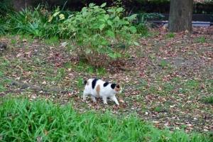 緑の草木と茶色い落ち葉の中を歩く日比谷公園の三毛猫さくら