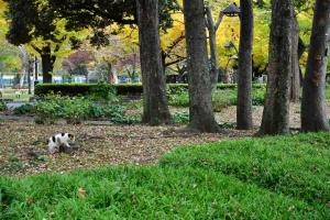 日比谷公園の紅葉と切り株に乗ろうとする三毛猫さくら