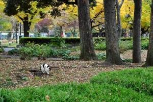 日比谷公園の紅葉と切り株に乗って爪とぎをする三毛猫さくら