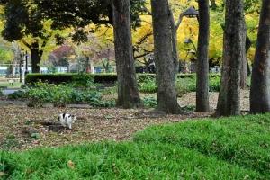 日比谷公園の紅葉と切り株に足を乗せてこっちを見る三毛猫さくら