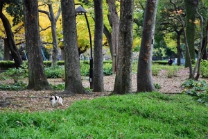日比谷公園の紅葉と向こうに歩いて行く三毛猫さくら