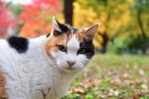 日比谷公園の紅葉を背景に頭から木が生えたように見える失敗写真の三毛猫さくら