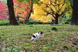 日比谷公園の紅葉と東を向く三毛猫さくら