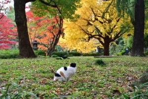 日比谷公園の紅葉と南を向く三毛猫さくら