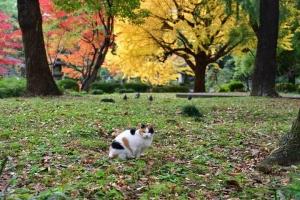 日比谷公園の紅葉と北を向く三毛猫さくら