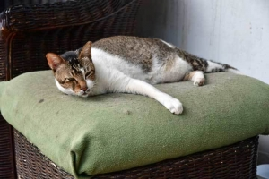 Gabrielle The Cat at ABC Backpackers Hostel Singapore