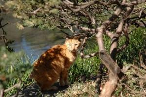 日比谷公園雲形池の茶トラ猫