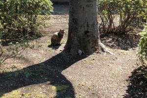 木の影と猫ハナちゃん
