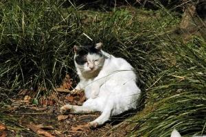 日比谷公園の白黒猫