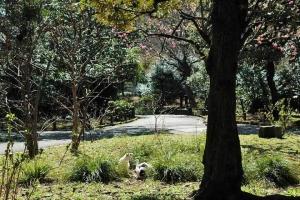 日比谷公園のハナモモと白黒猫x2