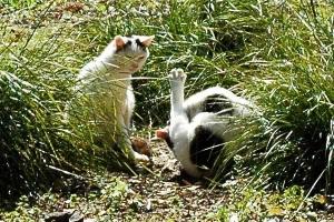 日比谷公園の白黒猫x2