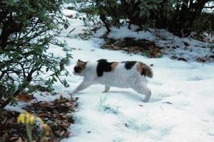 雪の日比谷公園の三毛猫さくら