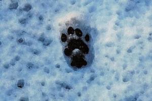 日比谷公園の三毛猫さくらの雪の足跡