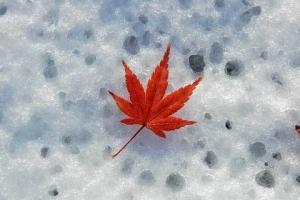 雪の上のモミジの葉@日比谷公園