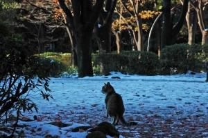 雪とキジ白猫@日比谷公園