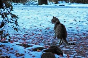 雪と前脚を上げるキジ白猫@日比谷公園