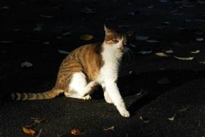 キジ白猫@日比谷公園