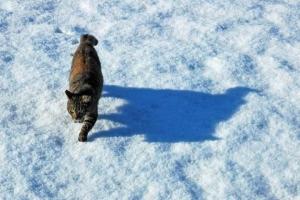 日比谷公園 雪の上の猫と影(影猫)