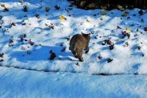 日比谷公園 雪の上の猫