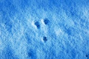 日比谷公園 雪の上の猫の足跡