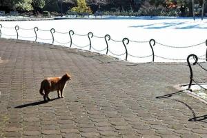 日比谷公園 茶トラ猫と芝生一面の雪