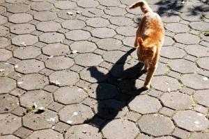 日比谷公園 茶トラ猫と影