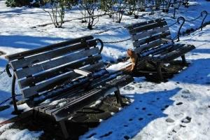 日比谷公園 雪の積もった日のベンチと茶トラ猫