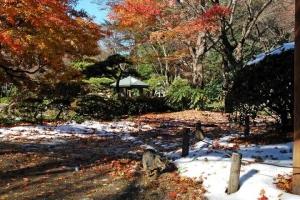 日比谷公園 元日の紅葉とキジトラ猫