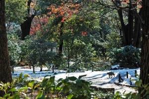 日比谷公園 雪と紅葉 キジトラ猫(右下に小さく)