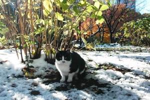 日比谷公園 雪と白黒猫