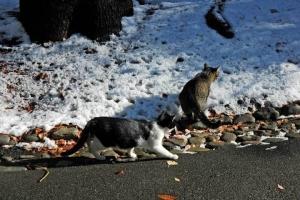 日比谷公園 雪と白黒猫とキジトラ猫