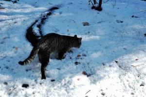 日比谷公園 雪とキジトラ猫