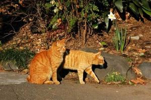 日比谷公園 茶トラ猫2匹